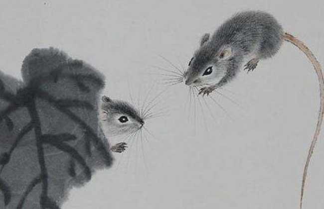 属鼠的人几月出生命最好