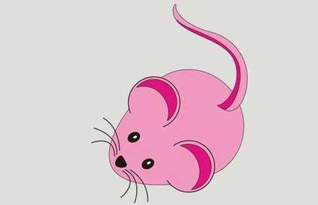 属鼠的人几点生最好命