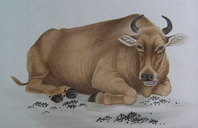 生肖属牛的年份有哪些?