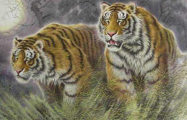 属虎的人几月出生最好?