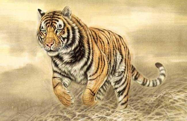 生肖属虎的年份有哪些?