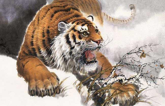 属虎人的婚姻与命运