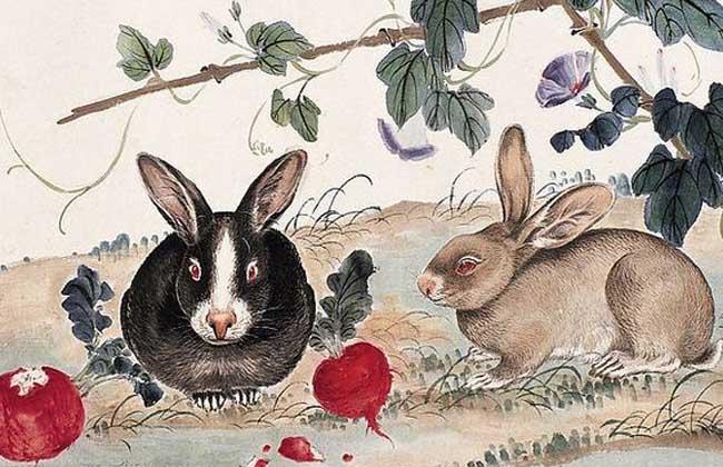属兔的和什么属相最配