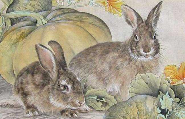 属兔的人几月出生最好?