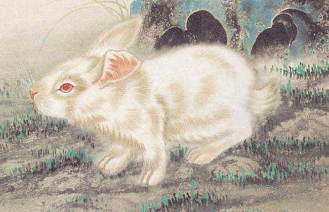属兔的几月出生最好