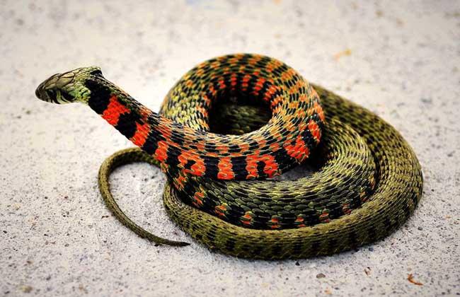 梦见打死蛇