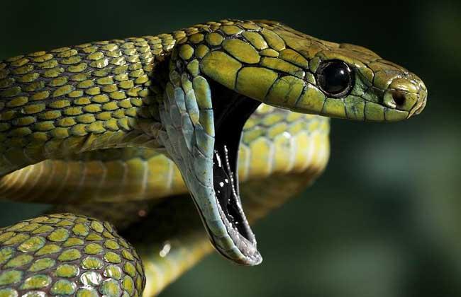 梦见蛇煮汤