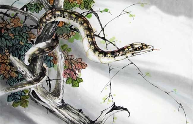 属蛇的人和什么属相最配?