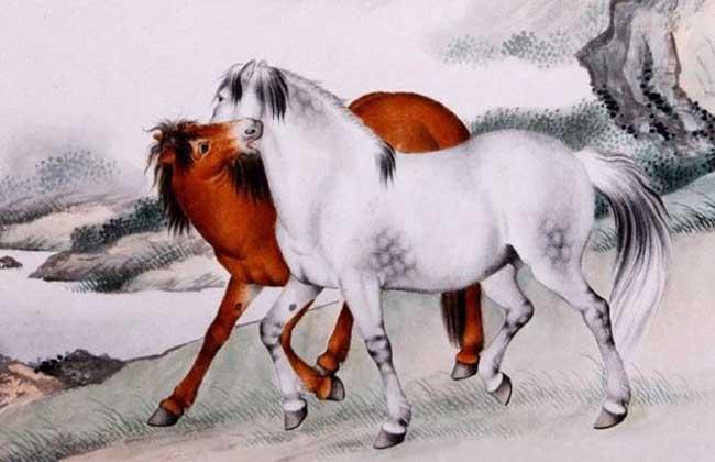 属马的人和什么属相最配?