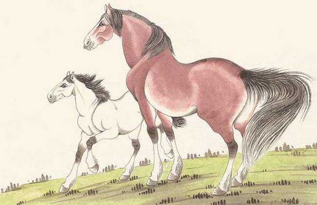 属马的几月出生最好
