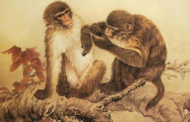 属猴的人几月出生最好?
