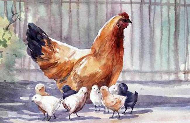 属鸡的年份