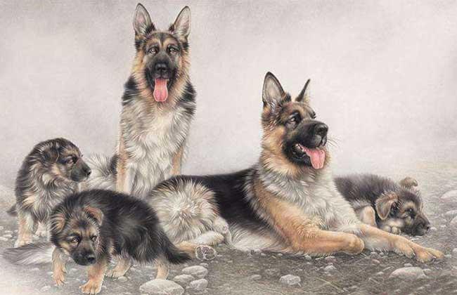2017年属狗的人多大?