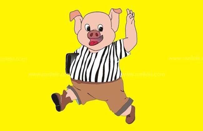 属猪的几月出生最好
