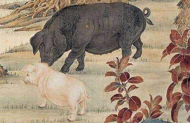 属猪的今年多大