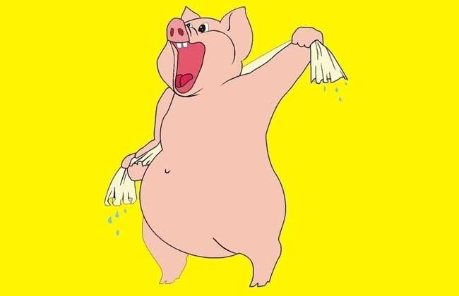 属猪的属相婚配表
