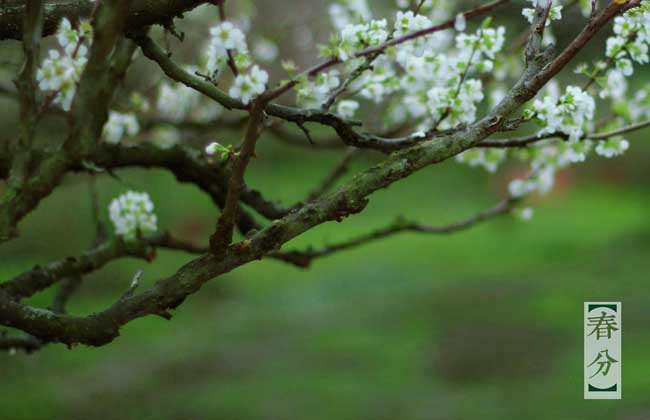 春分是哪一天