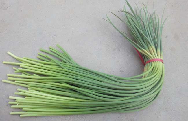 蒜苔多少钱一斤