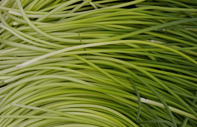 蒜苔是怎么长出来的?