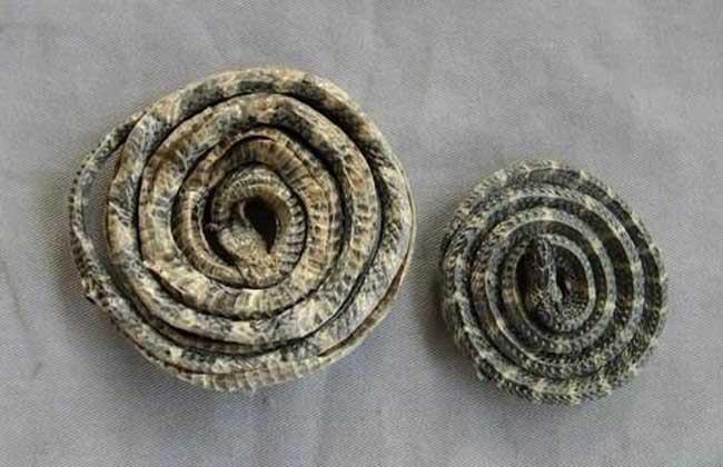 白花蛇的功效与作用