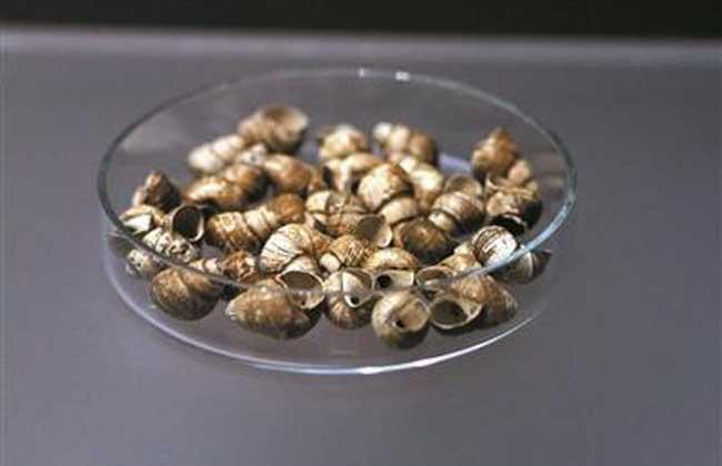 白螺蛳壳的功效与作用