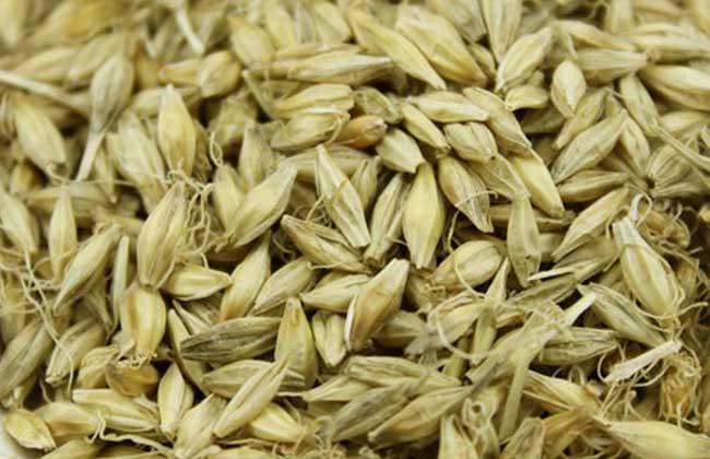 稻芽的功效与作用