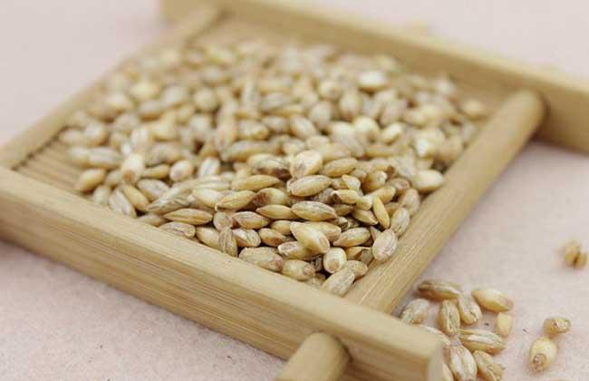 浮小麦的功效与作用