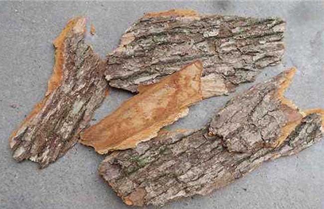 樟木的功效与作用