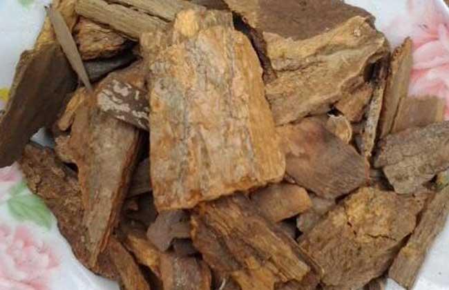 樟树皮的功效与作用