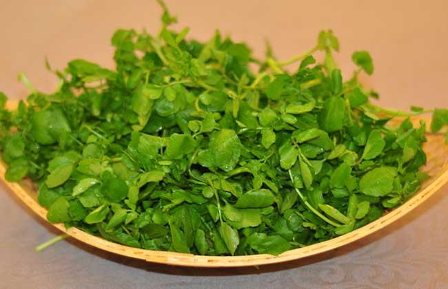 豆瓣菜的功效与作用