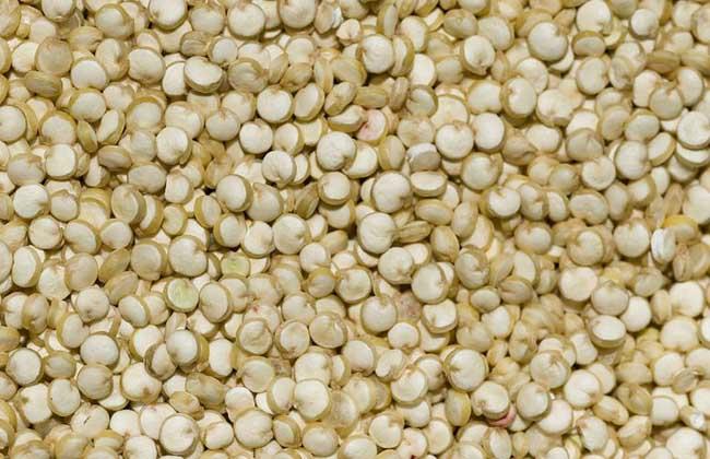 藜麦的营养价值