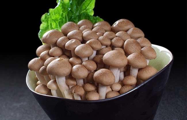 蟹味菇的营养价值