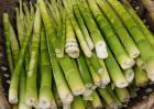 新鲜春笋怎么做好吃?