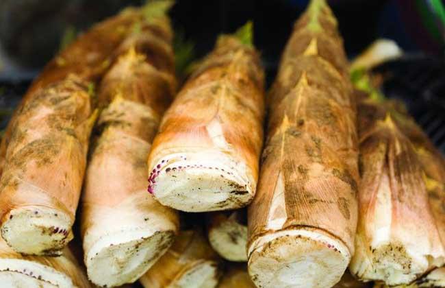 吃竹笋可以减肥吗?