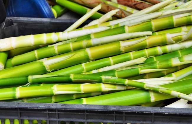竹笋不能和什么一起吃