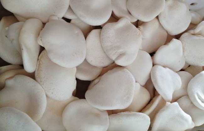 白灵菇和杏鲍菇的区别