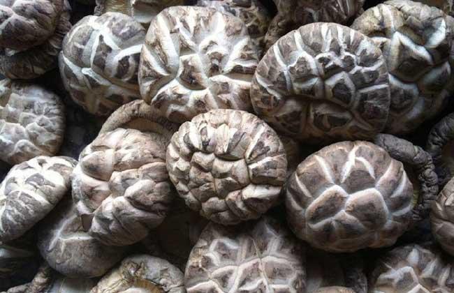 花菇价格多少钱一斤?