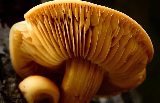 蘑菇的营养价值