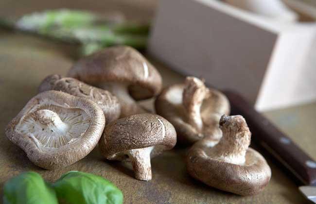 蘑菇的做法大全