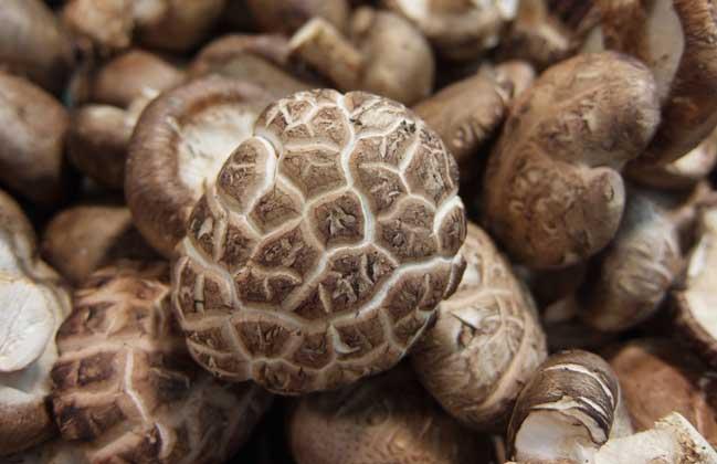 蘑菇的功效与作用