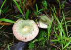 野生蘑菇怎么鉴别?