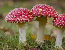 毒蘑菇种类及图片大全