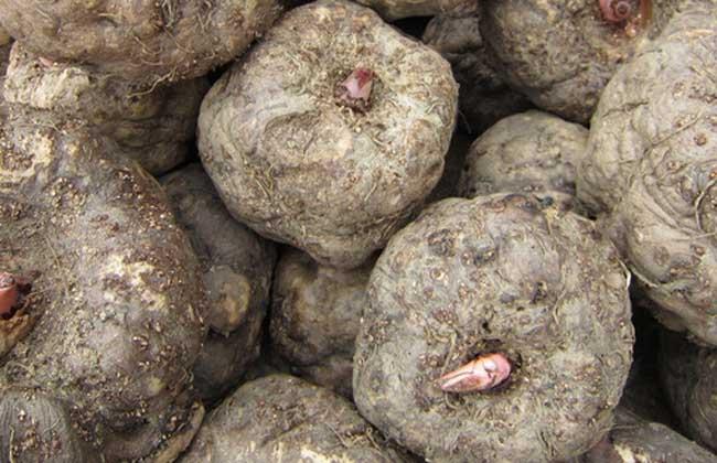 魔芋价格多少钱一斤?