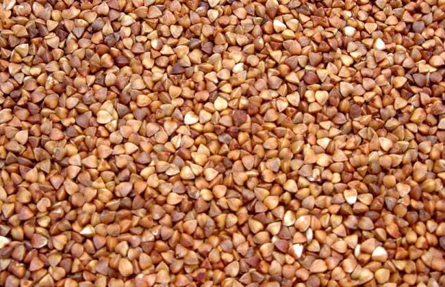 荞麦的营养价值