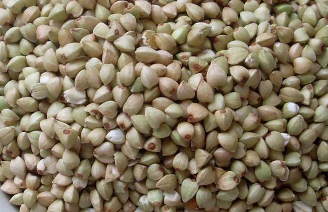 荞麦可以减肥吗