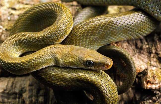 梦见家里有很多蛇是什么意思?