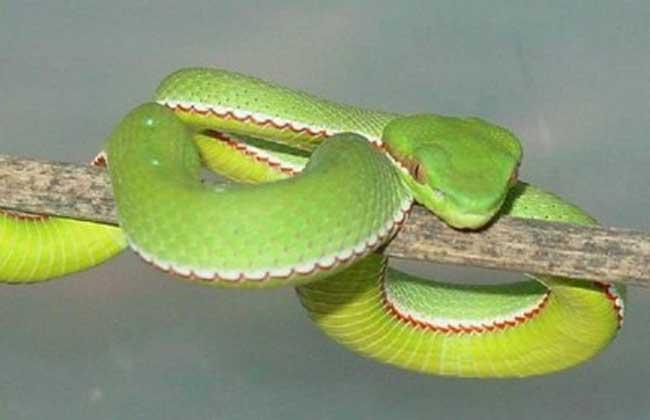 梦见家里有很多蛇