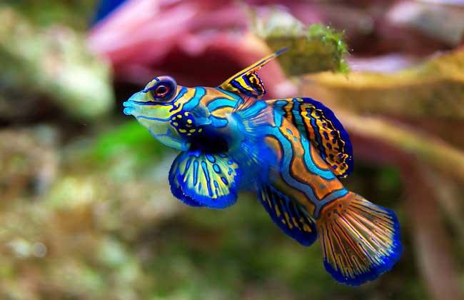 热带鱼种类图片大全