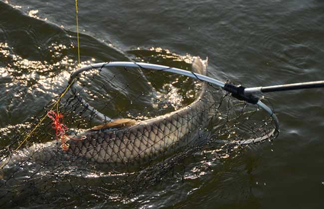 钓到大鱼有哪些遛鱼技巧?