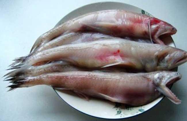 龙头鱼为什么有甲醛